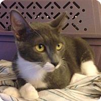 Adopt A Pet :: Anwyn - Cypress, TX