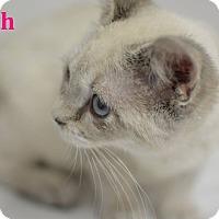 Adopt A Pet :: Faith - Miami Shores, FL