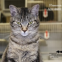 Adopt A Pet :: Florence - Baton Rouge, LA