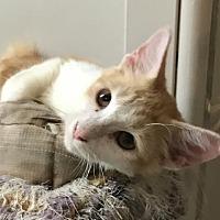Adopt A Pet :: Zeplin - Melbourne, FL