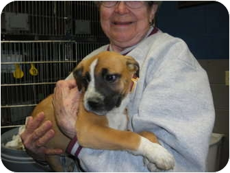 "Boxer Mix Puppy for adoption in MARION, Virginia - ""Hanna"" and ""Holly"""