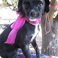 Adopt A Pet :: ASHER - Elk Grove, CA