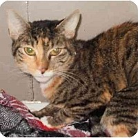 Adopt A Pet :: Aya - Maywood, NJ