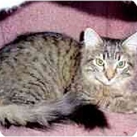 Adopt A Pet :: Landon & Lizzie - Arlington, VA