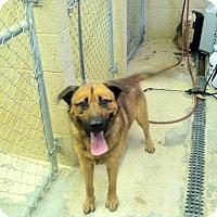 Adopt A Pet :: Bear Bear- URGENT - Providence, RI