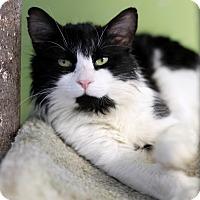 Adopt A Pet :: Highlander - Chicago, IL