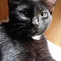 Adopt A Pet :: Carina - Brighton, MO