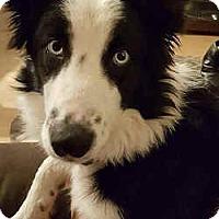 Adopt A Pet :: Frankie - Phelan, CA