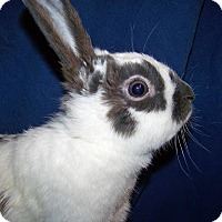 Adopt A Pet :: Livy - Alexandria, VA