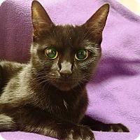 Adopt A Pet :: Mistique - Watauga, TX