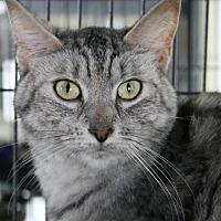 Adopt A Pet :: Buffy - Troy, IL