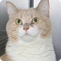Adopt A Pet :: Cleo - Waynesboro, PA