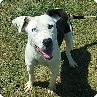 Adopt A Pet :: Perdita - Moberly, MO