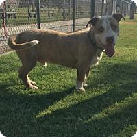 Adopt A Pet :: McGruff - Bakersfield, CA