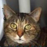 Adopt A Pet :: Bebe - Eugene, OR