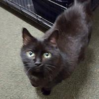 Adopt A Pet :: Molly - Delmont, PA