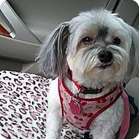 Adopt A Pet :: Chloe - Baton Rouge, LA