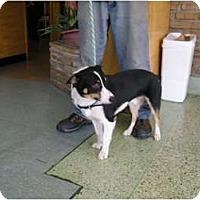 Adopt A Pet :: Bosco - Inola, OK