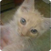 Adopt A Pet :: Spongebob - Mobile, AL