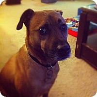 Adopt A Pet :: Connor - Davie, FL