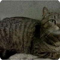 Adopt A Pet :: *Urgent! - Xenia, OH