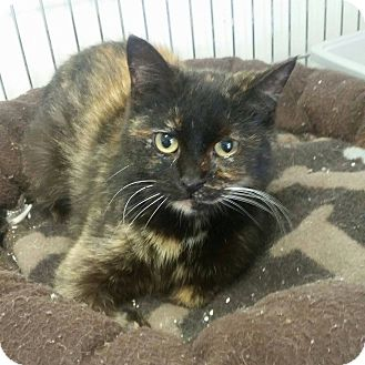 Domestic Mediumhair Cat for adoption in Owenboro, Kentucky - PARTY!