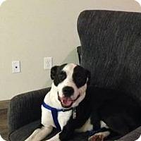 Adopt A Pet :: BENNY - Wilmington, NC