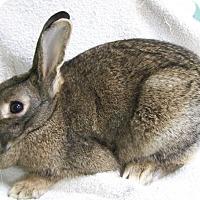 Adopt A Pet :: Kelsey - Harrisburg, PA