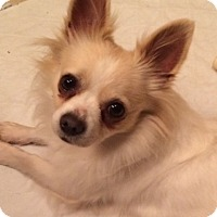 Adopt A Pet :: Fonzi - Edmond, OK