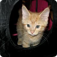 Adopt A Pet :: hannah - Fort Wayne, IN
