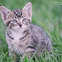 Adopt A Pet :: Snoopy - Webster, TX