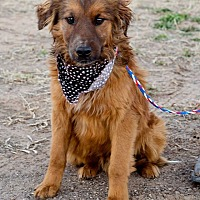 Adopt A Pet :: Red - Hereford, TX
