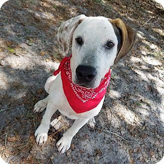 Hound (Unknown Type) Mix Dog for adoption in Umatilla, Florida - Elroy
