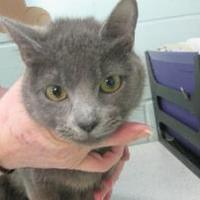 Adopt A Pet :: Frosty - Thunder Bay, ON