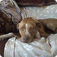 Adopt A Pet :: Marty - Los Angeles, CA