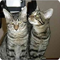 Adopt A Pet :: Grubbles - Putnam Valley, NY