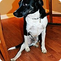Adopt A Pet :: Wrigley - Hagerstown, MD