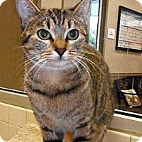 Adopt A Pet :: Ginger - white settlment, TX