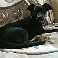Adopt A Pet :: Luther - Hewitt, NJ