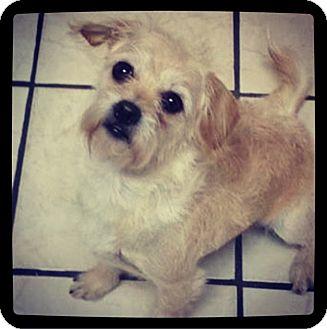 Cairn Terrier Mix Dog for adoption in Grand Bay, Alabama - Bessie