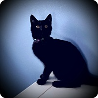 Adopt A Pet :: Timone - Fairborn, OH