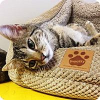 Adopt A Pet :: Cayenne - N. Billerica, MA