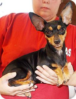 Chihuahua Mix Dog for adoption in Kalamazoo, Michigan - Abba