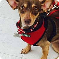 Adopt A Pet :: Angel - Beavercreek, OH