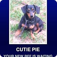 Adopt A Pet :: Winnie - Morrisville, PA