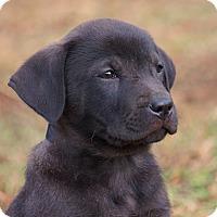 Adopt A Pet :: *Tonka - PENDING - Westport, CT