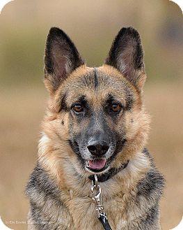 German Shepherd Dog Dog for adoption in Dacula, Georgia - Cherish
