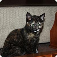 Adopt A Pet :: Olive (LE) - Little Falls, NJ
