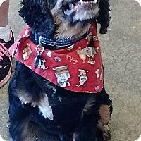 Adopt A Pet :: Samson-ADOPTED! - Sacramento, CA