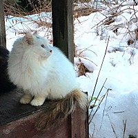 Adopt A Pet :: Serene - Duncan, BC